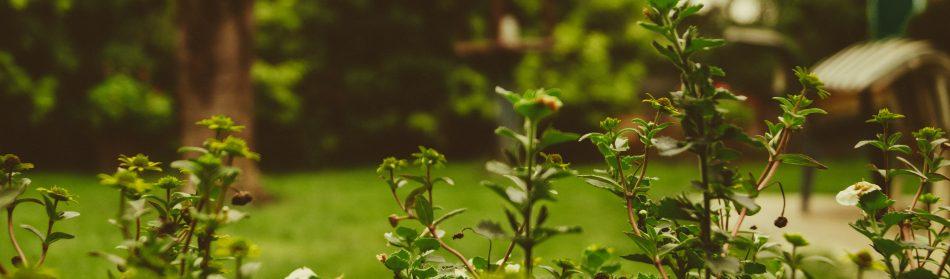Votre paysagiste vous accompagne tout au long de la vie de votre jardin