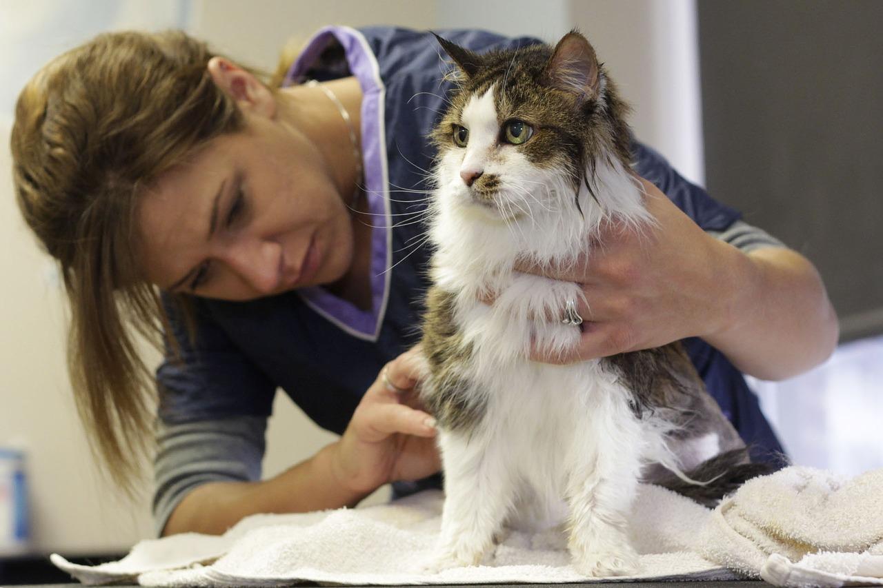 Pourquoi est-ce si important de toiletter son chat ?