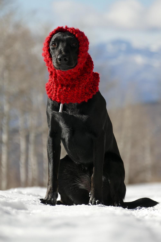 Les écharpes:accessoire de mode incontournable!