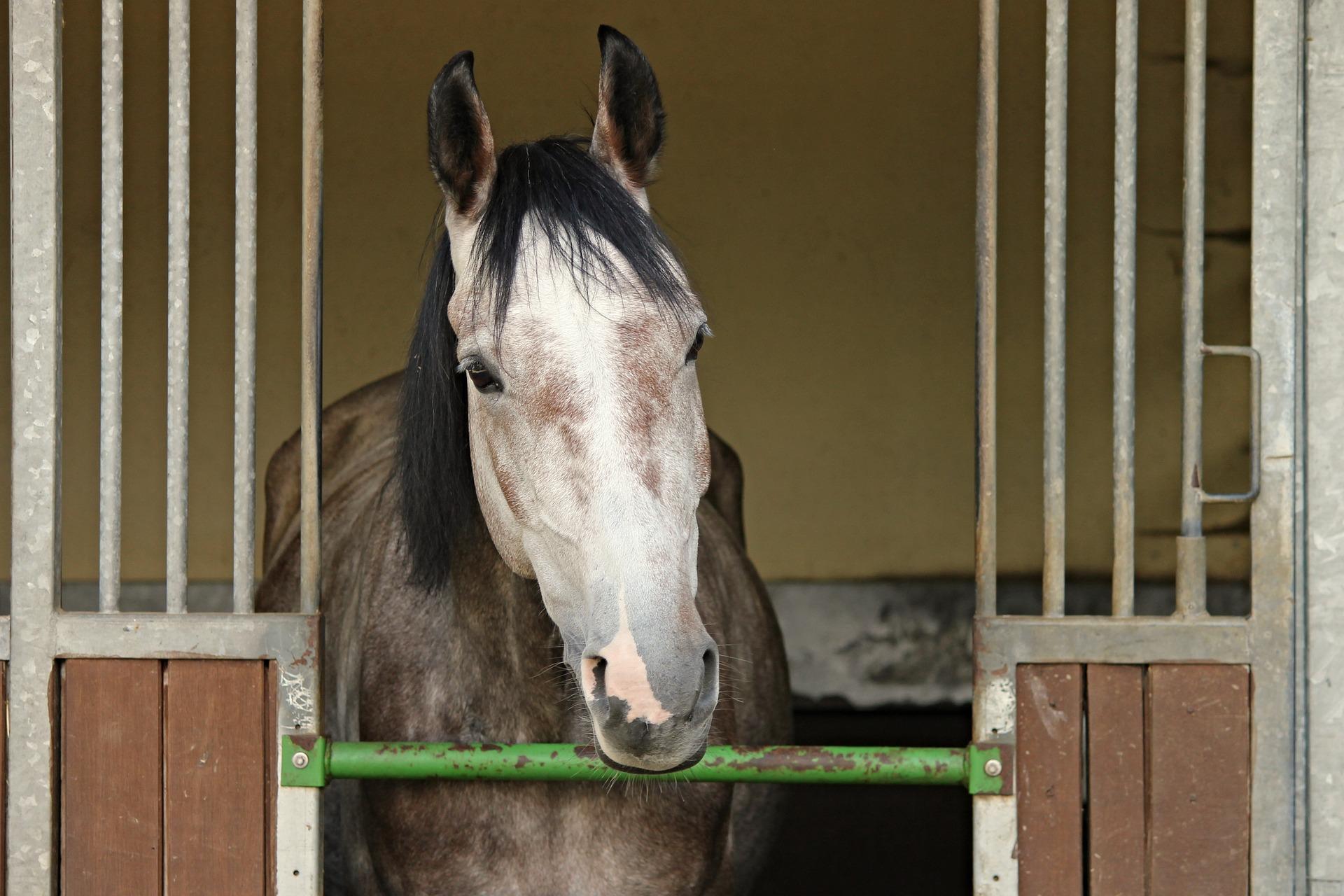 Comment préparer le transport de mon cheval?