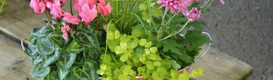 Pourquoi réaliser des compositions florales?