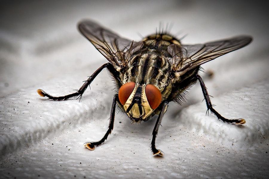 Stopper efficacement la propagation des moucherons dans les logements