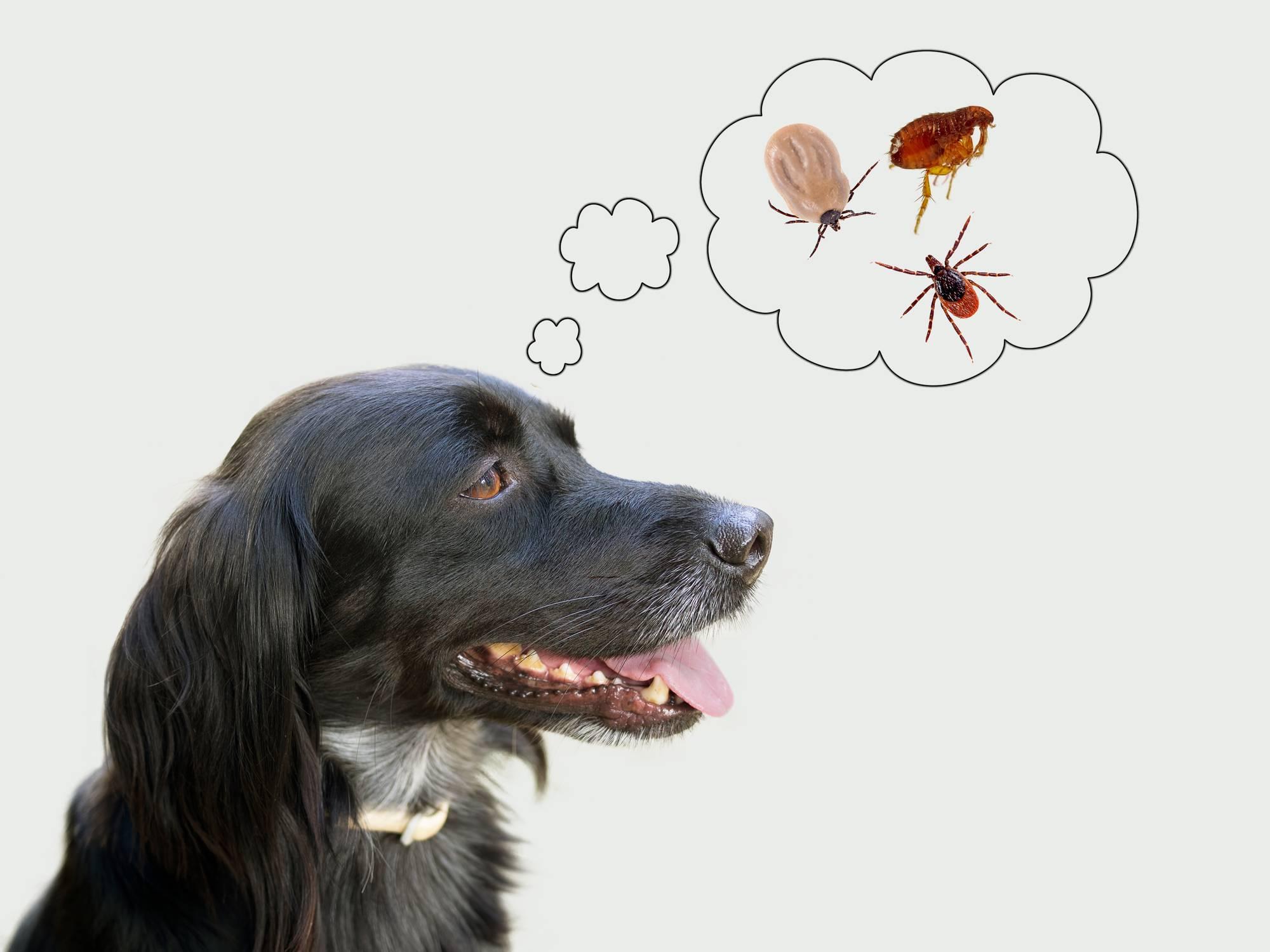 Comment bien protéger votre animal des parasites ?