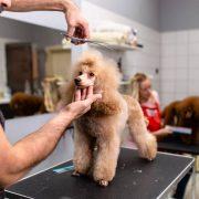Toilettage : comment rassurer son chien pour qu'il ne soit pas agressif ?