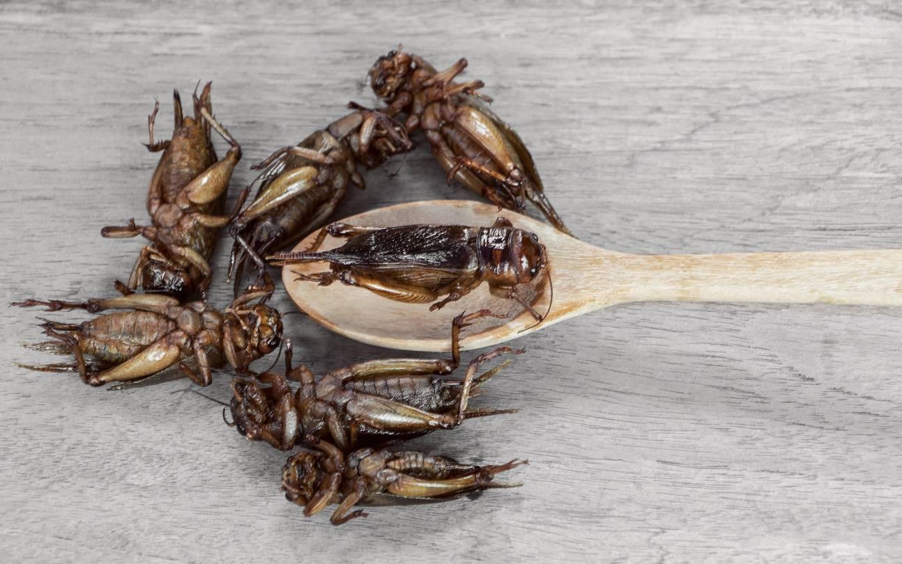 entomoculture élevage d'insectes