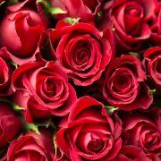La signification de la rose rouge